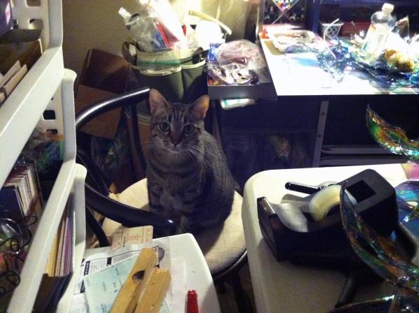 Sally the Cat